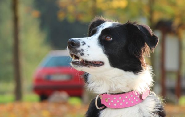 BODS-Dogservice Hundetraining